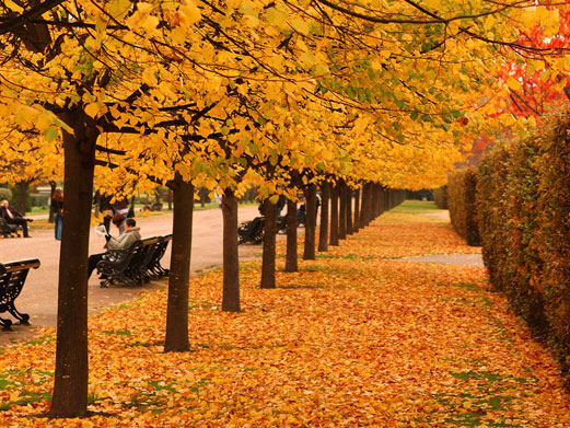 Fånga hösten!